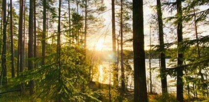 auringonlasku metsässä, jonka takana näkyy järvi