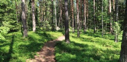 Polku kiemurtelee kesäisessä metsässä puiden runkojen välissä. Puiden alla kasvaa mustikanvarpuja.