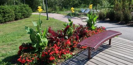 Kesäkukkaryhmä Thurmaninpuistossa
