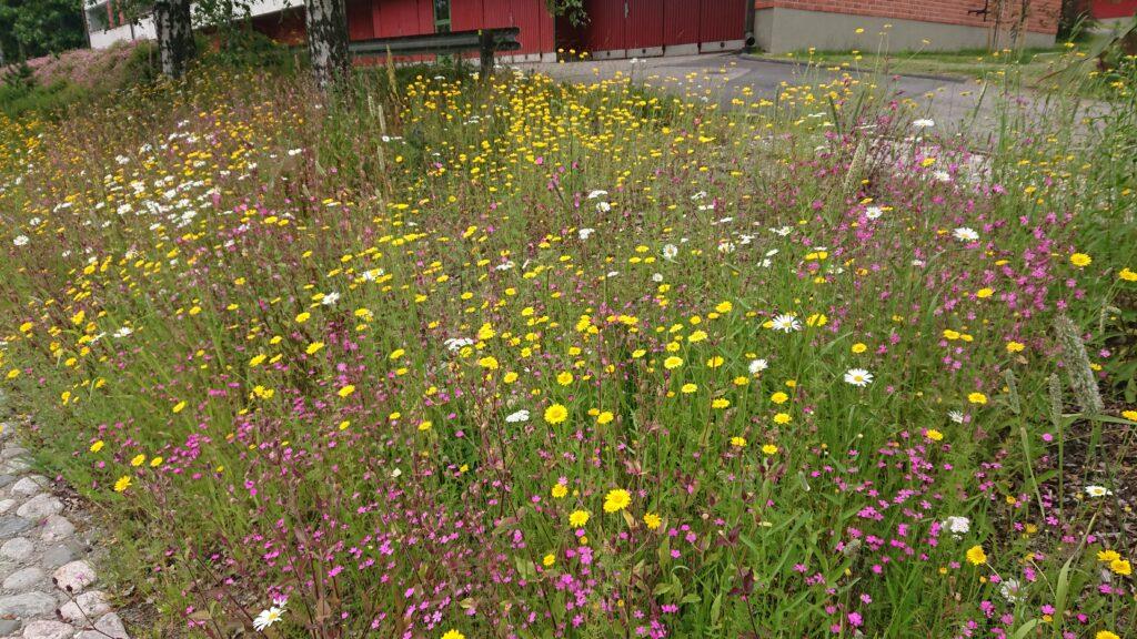 Värikäs pieni kukkaniitty rakennuksen ja pysäköintialueen vieressä.